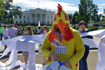 The Politics of Poultry